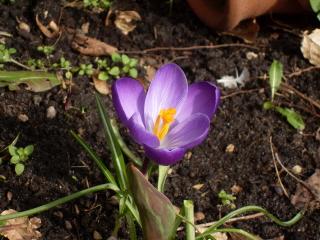 bloemetje1
